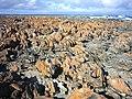 Algae-covered rocks - panoramio.jpg