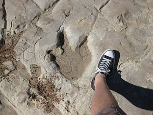 Purgatoire River track site - Theropod footprint at the Purgatoire River dinosaur track site, Picket Wire Canyonlands, Colorado, U.S.A.