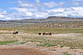 American Competitive Trail Horse Ride (7336788806).jpg