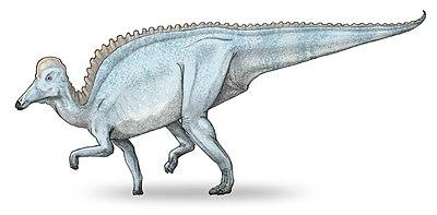 Amurosaurus-v3.jpg