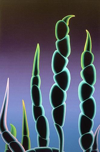 Richard Wetzel - Image: Anakena 1983