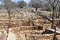 Ancient Shiloh IMG 2920.JPG