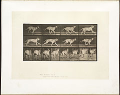 Animal locomotion. Plate 707 (Boston Public Library).jpg