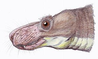 Annatherapsidus - Image: Annatherapsidus 1DB