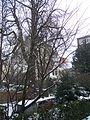 Anne Frank tree.JPG
