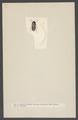 Anobium - Print - Iconographia Zoologica - Special Collections University of Amsterdam - UBAINV0274 001 08 0017.tif