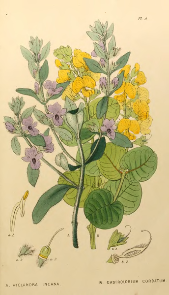 File:Appendix to the first twenty-three volumes of Edwards's Botanical Register - Plate 5-original.png