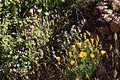Aravaipa Canyon Wilderness (9414987828).jpg