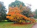 Arboretum (8) - panoramio.jpg