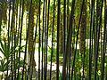 Arboretum Trsteno 10.jpg