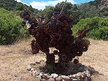 Lacci raccolti e distrutti dalle guardie del WWF della Riserva di monte Arcosu, usati per la cattura del Cinghiale sardo e del Cervo sardo