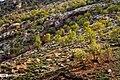 Arghavan valley, Ilam 2020-04-15 02.jpg