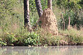 At the Gambia River were also termite mounds in the Gambia.jpg