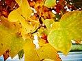 Autumn 2015 (127915573).jpeg