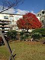 Autumn Leaves in Kaizuka Campus of Kyushu University.jpg
