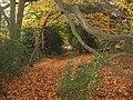 Autumn leaves - geograph.org.uk - 1087599.jpg