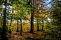 Autumn light in the forest.jpg