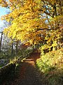 Autumnal colours at Kielder - geograph.org.uk - 604991.jpg
