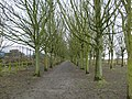 Avenue of Trees - geograph.org.uk - 1707770.jpg