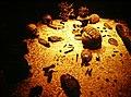 Aztec Templo Major Sacrificial Vault (9792580943).jpg