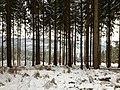 Bäume - panoramio (2).jpg