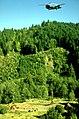 BLM Oregon forestry.jpg
