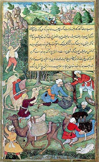 Almond - Persian miniature depiction of the almond harvest at Qand-i Badam, Fergana Valley (16th Century)