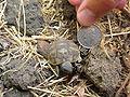 Baby tortoise.jpg