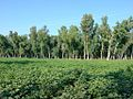 Bajwat Village Mahal Sialkot Green.jpg