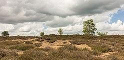 Balloërveld, natuurgebied in Drenthe 29.jpg