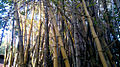 Bamboo123.jpg