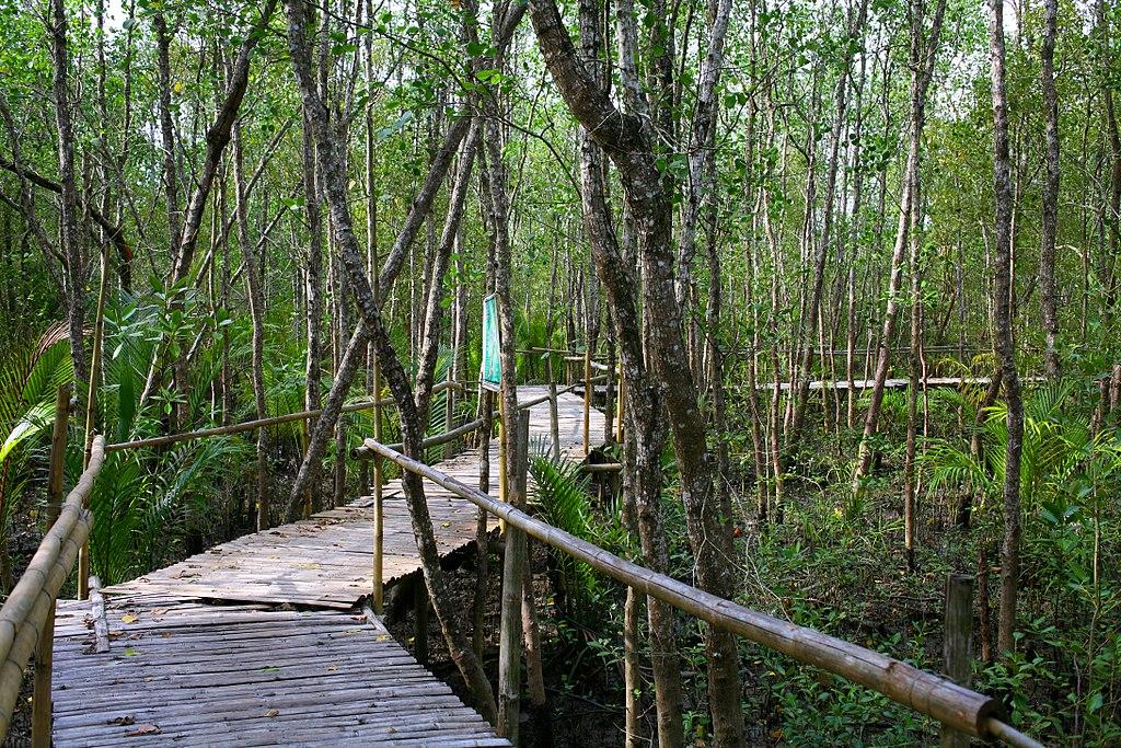 Mangroves at the Bakhawan Eco-Park