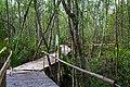 Bamboo bridge and Mangroves at Bakhawan Eco-park and Research Centre.jpg