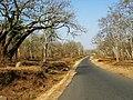Bandipur Tiger Reserve - panoramio (9).jpg