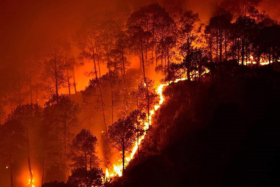 2019 Bandipur forest fires