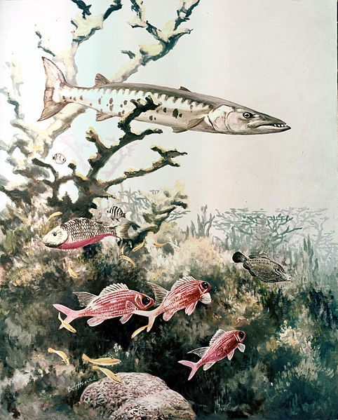 File:Barracuda and reef fishes.jpg