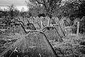 Bastogne Historic Walk 2011 (6545662509).jpg