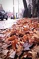 Bathurst Street, Toronto - panoramio.jpg
