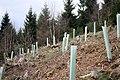 Baumpflanzaktion Bergwaldprojekt Werdohl 2015.jpg
