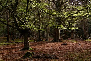 New Forest Area in southern England