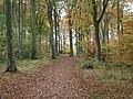 Beechwoods Nature Reserve - geograph.org.uk - 604834.jpg