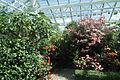 Bergianska trädgården-IMG 3473.jpg
