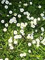 BesfortPicturesForWikimediaKabashiBesforti064.jpg
