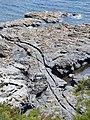 Bessy's Cove tracks.jpg
