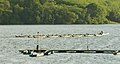 Bewl Water - boats JLV 3627 (507615935).jpg