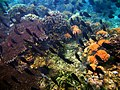 Big group of different fishes, Mabini, Batangas, Philippines - panoramio.jpg