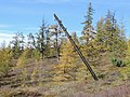 Bilibinsky District, Chukotka Autonomous Okrug, Russia - panoramio (240).jpg