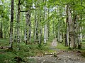 Biogradska gora - National Park, the oldest protected natural resource in Montenegro 06.jpg