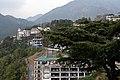 BirG047-Dharamsala.jpg
