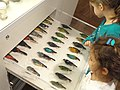 Bird exhibit - Royal Ontario Museum - DSC00188.JPG